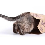 Catnip-infused Bag