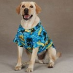 Dog Hawaiian Shirt