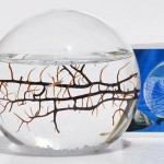 Ecosphere with Shrimp
