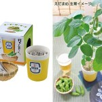 Grow Your Own Edamame