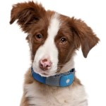 GPS Pet Collar